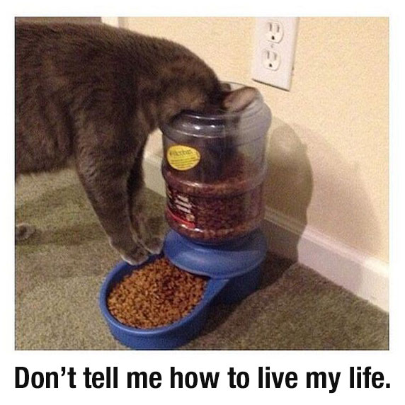 dont tell me how to live my life funny cat