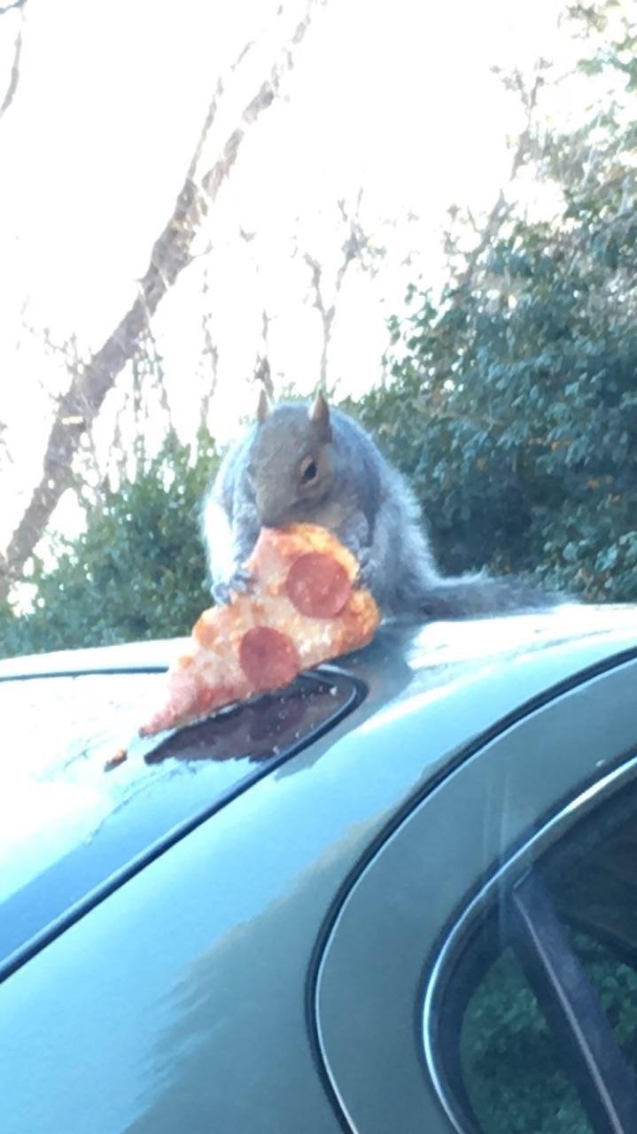 squirrelfriend with pizza